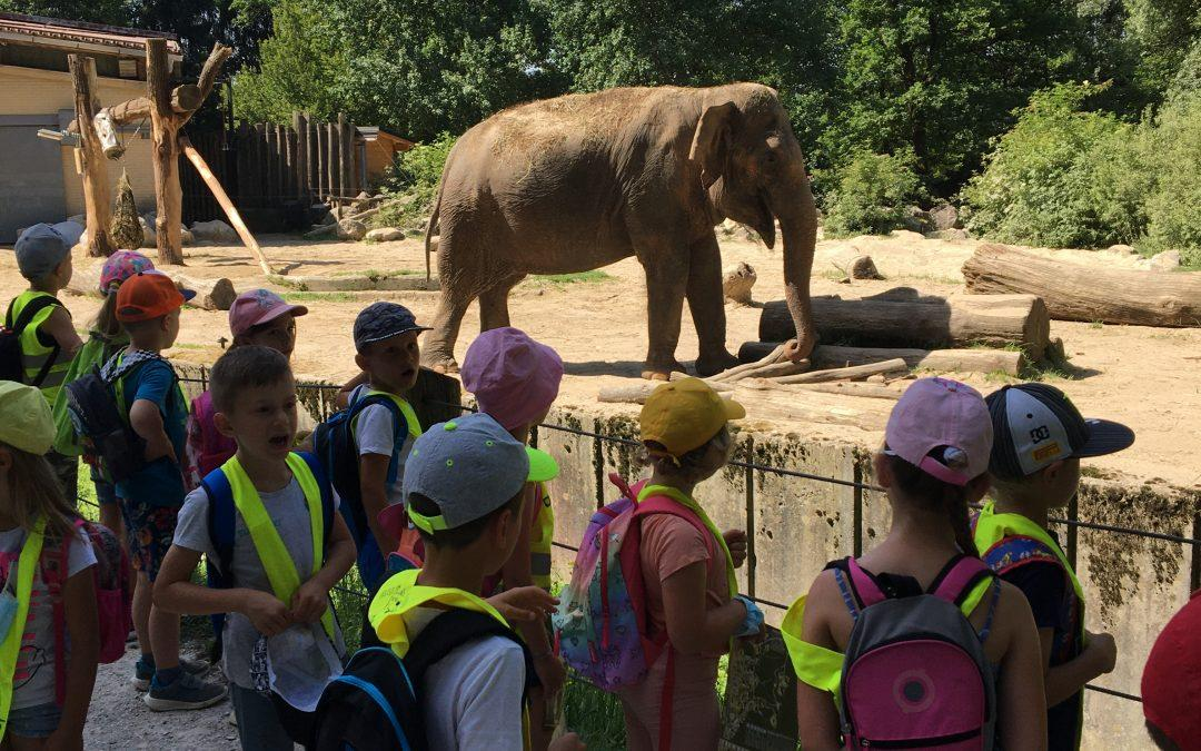 Zaključna ekskurzija prve triade: Obisk živalskega vrta